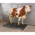 Picture of Waga platformowa PS 3000 do 1500 kg