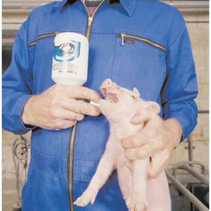 Obrazek dla kategorii mleko, elektrolity, żelazo,probiotyki,ochrona prosiąt
