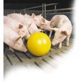 Obrazek Zabawka dla świń - piłka  30 cm.  51119-00-00